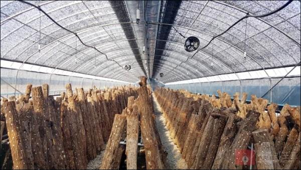 산림소득 지원 사업 자료사진(표고버섯).jpg