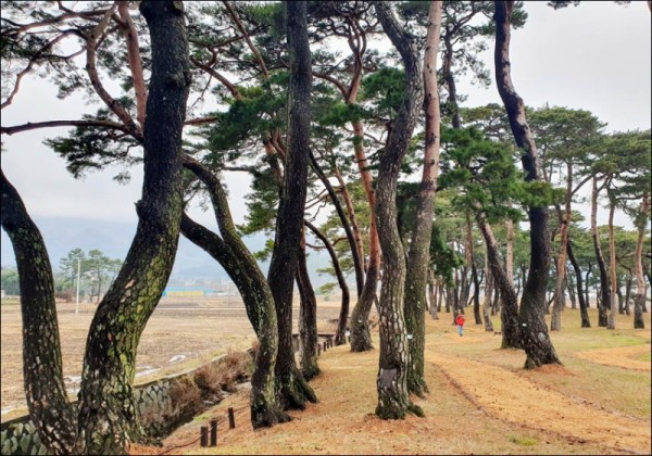 2월의 명품숲 보성 (1).jpg