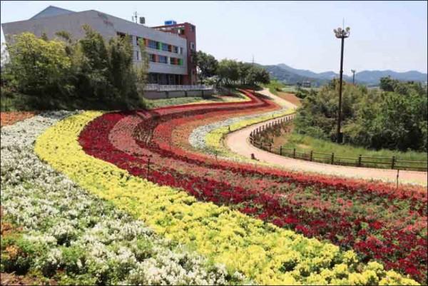 화순 남산공원 금어초.jpg