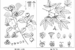 완도수목원, 자생식물 세밀화 특별展