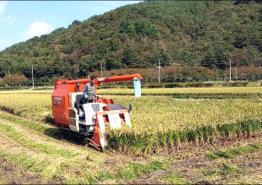 쌀값 반등세…태풍 등으로 수확량 감소 때문