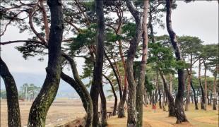 '보성 웅치 용반 마을전통숲'...  전남도, 2월 명품숲