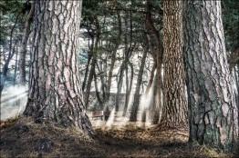 목포 '고하도 이충무공 곰솔숲'... 전남도 1월 명품숲