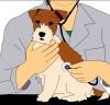 전남지역 축산 현장 수의사, 전염병 예방 앞장 결의