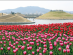 봄 여행주간, 전남서 특별한 추억여행...