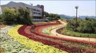 <포토뉴스>화순 남산공원에 활짝 핀 금어초